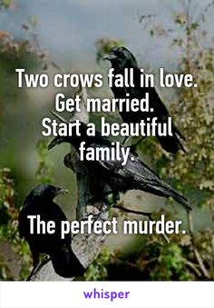 Two crows fall in love. Get married.  Start a beautiful family.   The perfect murder.