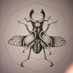 Beetle, ink on paper