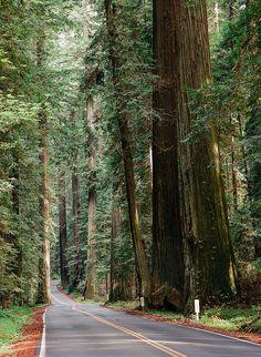 Avenue of the Giants II   Redcrest, Humboldt County, California, USA