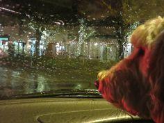 Not so soft Seattle rain...