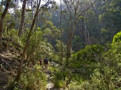 Great Dividing Trail