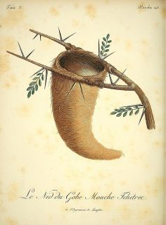 Nest, 19th c illustration