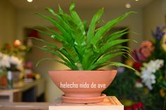 #plantas #macetas #barro #artesanal #mx #floreria #helecho #helechonidodeave