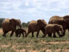Todays song from my subconscious ▶ Baby Elephant Walk - Music by Henry Mancini - YouTube