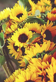 Sunflowers!  Oh summer, I miss you!