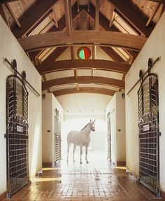 Gainesway Farm, established in 1965 by John R. Gaines, the man behind the creation of the Breeders' Cup.