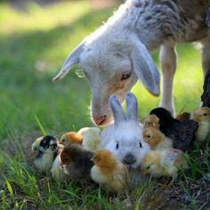 Strange Farm Animals | -farm-animals-for-kids-funny-animal-pictures-with-captions-very-funny ...