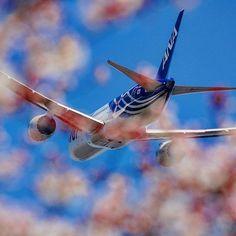 【masaaki_yamanishi7478】さんのInstagramをピンしています。 《2度と撮れない組み合わせ。  登場から何度、桜の咲く季節を過ごしたかわかりませんが2017年の桜を見ることなくJA801Aは通常塗装となります。  #masaaki_yamanishi飛行機コレ  #旅#旅行#travel#trip #B787#B7878#JA801A#Dreamliner #特別塗装#specialmaking #全日本空輸#allnipponairways#ANA #日本#japan#東京#tokyo #写真部#写真 #写真撮ってる人と繋がりたい #写真好きな人と繋がりたい #ピンク#pink#空#sky #桜#cherryblossom #special_spot_ #japan_art_photography》