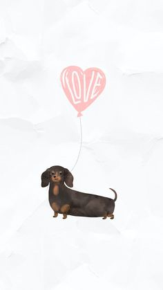 Dachshund with a love heart on a paper mobile screen background | premium image by rawpixel.com / nunny Dachshund Drawing, Puppy Drawing, Dachshund Art, Dapple Dachshund, Dachshund Puppies, Pet Dogs, White Bulldog, Chocolate Labrador Retriever, Dog Illustration