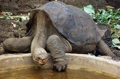 This week the world lost Lonesome George, last of the Pinta Island giant tortoises. Guests from our Galapagos Islands cruises shared their thoughts as we created a tribute to this legendary creature.
