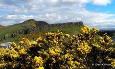 Arthur's Seat, Scotland: One of the best natural wonders in Europe Best Hikes, Natural Wonders, Beautiful World, Places To Visit, Around The Worlds, Journey, Europe, Earth, Arthur's Seat