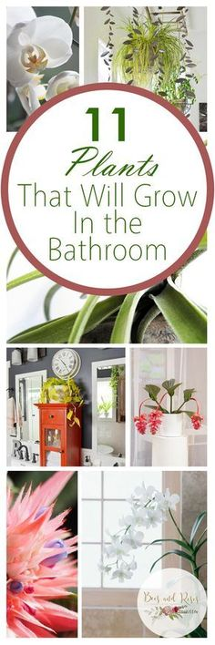 11 Plants That Will Grow In The Bathroom