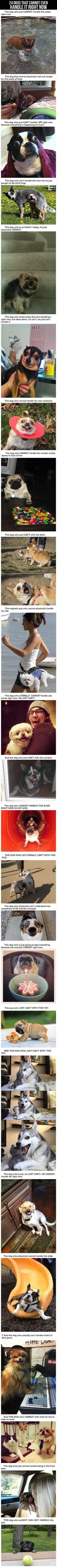 24 Dogs That Cannot Even Handle It Right Now cute animals dogs adorable dog puppy animal pets lol humor funny pictures funny animals funny pets funny dogs: