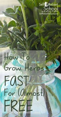 How to make and prepare herb cuttings. Save money and grow herbs for almost free! #beselfreliant