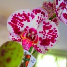 Orchid by melva