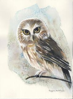 Owl by Marjorie McCullough