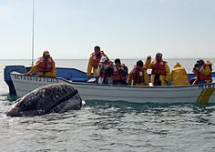California - Top 10 Best Spots For Whale Watching