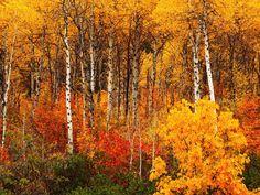 Wenatchee National Forest, Washington