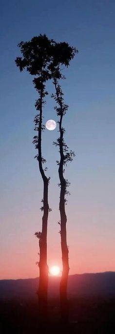 Two trees, the moon and the sun!