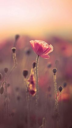 (notitle) The post Untitled appeared first on Ruby Sanders. Flowers Nature, Spring Flowers, Cellphone Wallpaper, Iphone Wallpaper, Amazing Flowers, Beautiful Flowers, Pretty Backgrounds, Flower Aesthetic, Flower Wallpaper
