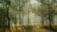 Green, Park, Season, Nature