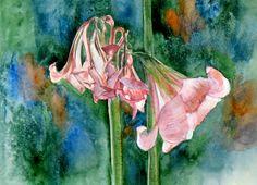 Fleurs fanées d' Amarillys - Watercolor - NL