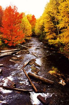 Algonquin Park Ontario by swisscan, via Flickr Travel And Tourism, Travel Destinations, Group Of Seven Artists, Ontario Travel, Algonquin Park, Autumn Lights, Visit Canada, Travelogue, Painting Tutorials