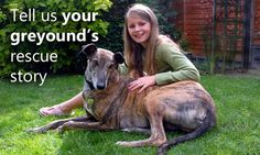 Tell us your greyhound's rescue story and help us give other deserving dogs the second chance they deserve  http://www.grey2kusa.org/give/monthly.php