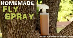 Homemade Fly Spray Recipe - This homemade fly spray recipe is the bee's knees.  But it doesn't keep away bees. At least I don't think it does.Anyway, I don't care about bees right