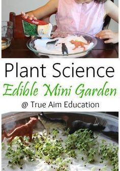 True Aim shares this fun edible mini garden science activity that your kids will love! After just a couple weeks they're able to see and taste the benefit of their work! Science For Kids, Science Activities, Plant Science, Big Garden, Couple Weeks, Mini, Ethnic Recipes, Benefit, Plants