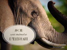 Avoir une mémoire d'éléphant. C'est la faculté d'avoir une bonne mémoire. Vive le français!