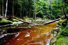 Cachoeira do Santuário - Presidente Figueiredo, Amazonas, Brasil