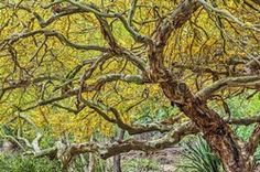 Desert Botanical Garden Trees_20x30, Artist Bruce Boyce
