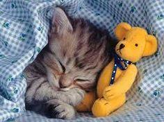 Résultats de recherche d'images pour «cat with stuffed animal»