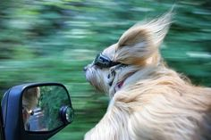Riding in the wind....