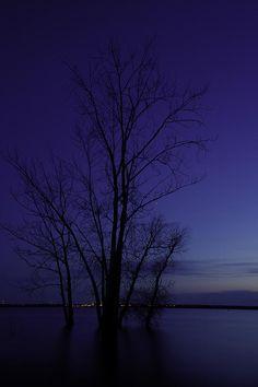✯ Tree Silhouette