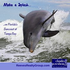 Abundant sea life in warm Gulf of Mexico waters at the Florida Suncoast near Tampa Bay..the dolphin.
