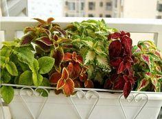 Image result for coleo jardin