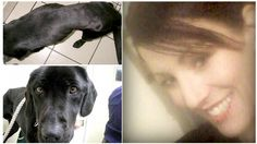 Suspect: 41-year-old Beverley Tucker of Wentworth Rd, Yeovil, United Kingdom  Jacks, a sweet Labrador pet, was discovered ...