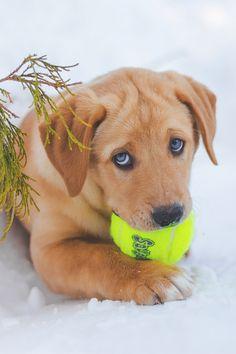 Cute pup by: Rafael Abella