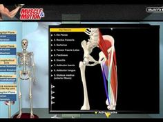 Muscle and Motion Interactive 3D anatomy of the muscular and skeletal systems  Kinesiology: See the bones, muscles and tendons in action, and how they work together to allow movement. 3D analysis of body movements  Test and Principles of workout theory  Strength and Endurance workout methods  Strength Training Workouts Programs  Exercise physiology with unique animations. Go to MuscleandMotion.com to download more FREE videos that are not available on Pinterest or on YouTube!