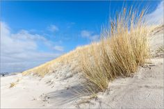 Poster Dünen am Strand von Dierhagen, Mecklenburg-Vorpommern