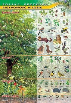 Plansza warstwy lasu Elementary Bulletin Boards, Pet Birds, Animals And Pets, Montessori, Activities For Kids, Homeschool, Survival, Teaching, Education