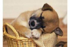 Köpeğinize evde sıcak ve hava cereyanından uzak bir yaşam alanı sağlayınız. Köpeğiniz bu alanı uyumak ve dinlenmek için kullanacak ve burada kendini güvende hissedecektir. Bu alan bir kapısı olan kapalı bir kutu ya da yuva olabilir. Bunun dışında yere koyacağınız onun boyutlarına uygun bir yatak ya da sepet de olabilir.