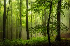 Wald #31 by HeikoGerlicher.deviantart.com on @deviantART