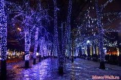 светодиодными деревьями - Pesquisa Google