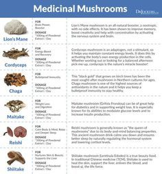 10 Benefits of Lion's Mane Mushroom - You can find Medicinal mushrooms and more on our Benefits of Lion's Mane Mushroom - Calendula Benefits, Lemon Benefits, Coconut Health Benefits, Benefit Brow, Nutrition Education, New Hampshire, Animal Crossing, Maybelline, Heart Attack Symptoms