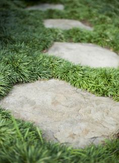 mondo grass surrounding stepping stones