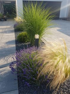 garten pflegeleicht Planted gravel bed- Bepflanztes Kiesbeet I planted this gravel strip with grasses and lavender a good two years ago, with an evergreen yew ball in between. It just looks great and is very easy to care for. Rooftop Garden, Indoor Garden, Outdoor Gardens, Garden Pool, Indoor Outdoor, Amazing Gardens, Beautiful Gardens, Landscape Designs, Real Plants