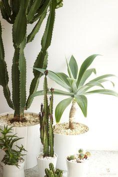 Houseplants in modern planters